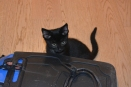 The kitten Elmo, belonging to Valentina who kindly hosted me in the Italian city Oderzo :-)