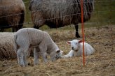 Now lambs are a nice sign of spring :-)